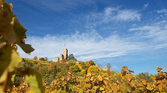 Weithin sichtbares Wahrzeichen Wachenheims ist die Burgruine Wachtenburg. Auf dem Geländer der Burgruine befindet sich eine Burgschänke, die Pfälzer Wein und Gerichte anbietet.