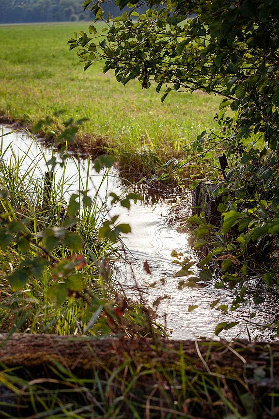 Wiesenbewässerung ©JackSenn