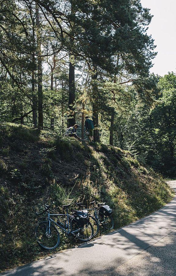Immer wieder führen kleine Pfade von der Straße auf bewaldete Anhöhen. Der herbwürzigen Einladung der Kiefern, die in der Sonne duften, ist schwer zu widerstehen.