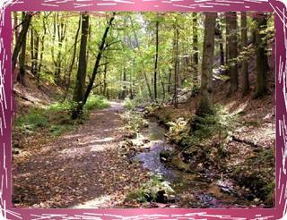 Pfalzer Wald(1)