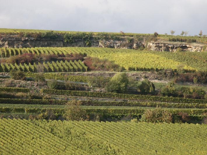 Weinlage Saumagen