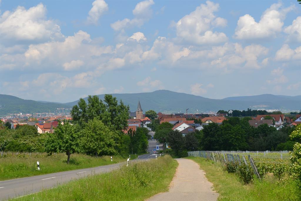 Kirrweiler von Venningen