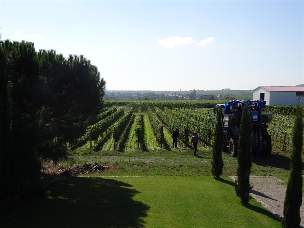 Terrasse in Südseite-Boulebahn-Blick nach Forst
