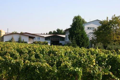 Weingut Knöll und Vogel, BZA